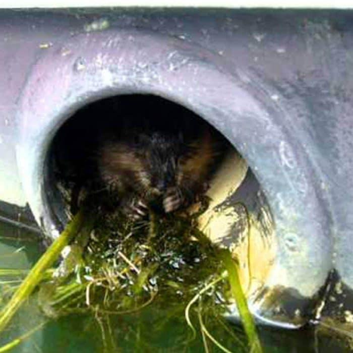 Muskrat Otter Exhaust Guards
