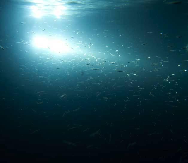 Hurley marine underwater light gallery lights at their for Best underwater fishing lights