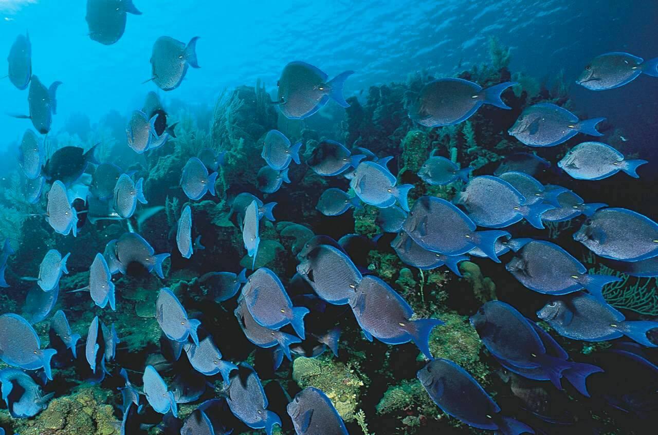 bonaire-fish