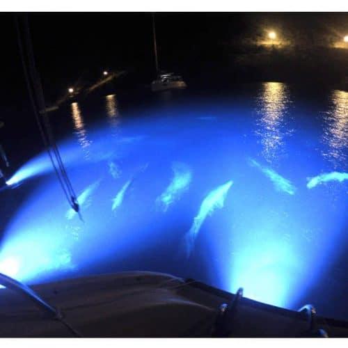 Sea Vue Lights